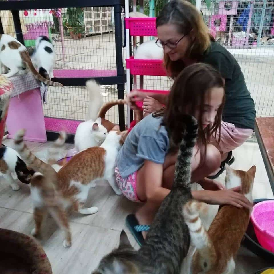 Visitors in our cat's haven - Animal Rescue Center Costa Rica