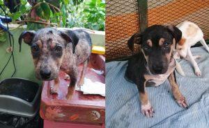 Stories - Animal Rescue Center Costa Rica